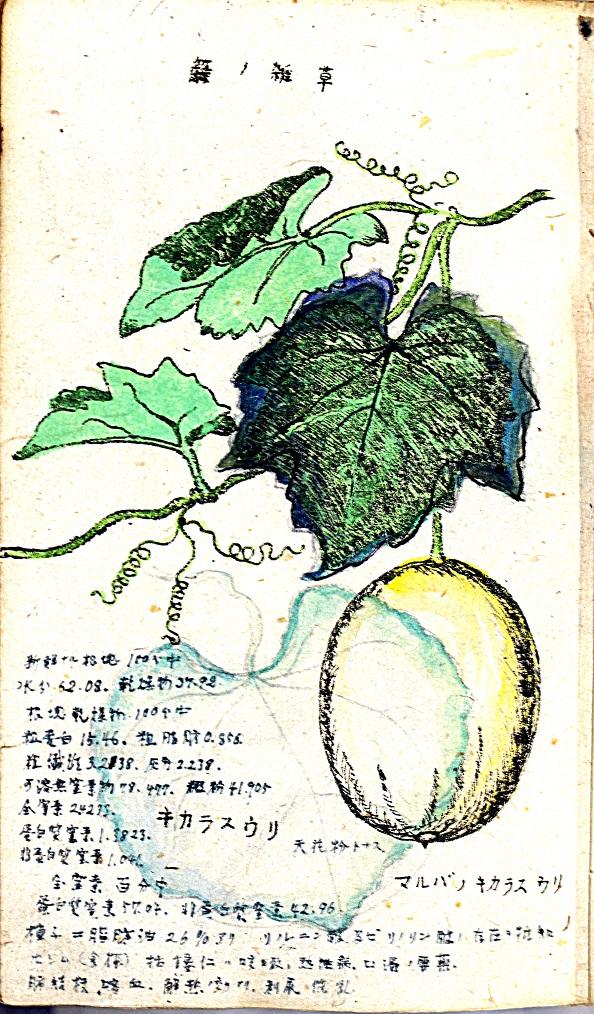 ふるさとの物語 第53回「佐藤雨山」~植物を精密かつ美しく~