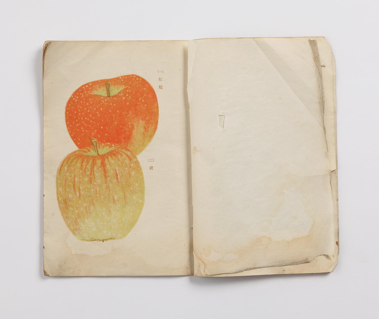 Яблоки Аомори