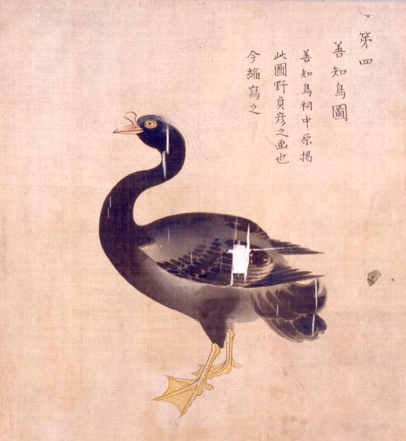 善知鳥図(百川学庵筆『津軽図譜』 当館蔵)